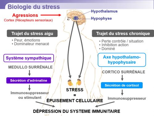 biologie_stress